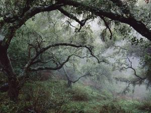 Oak Tree Forest after Storm by Douglas Steakley