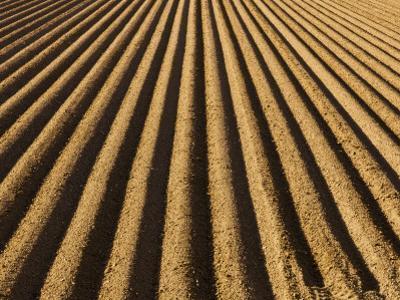 Ploughed Field by Douglas Steakley