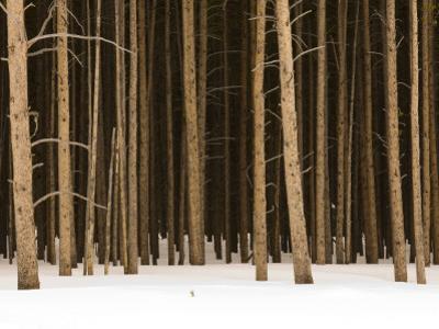 Trees in Winter by Douglas Steakley