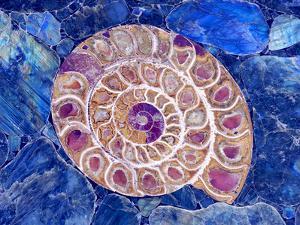 Ammonite in Labradorite by Douglas Taylor