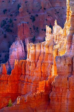 Bryce Canyon Dawn by Douglas Taylor