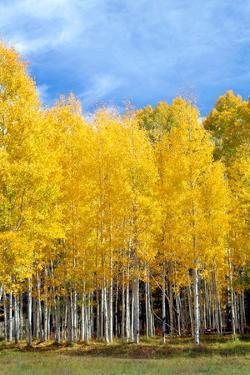 Colorado Color II by Douglas Taylor