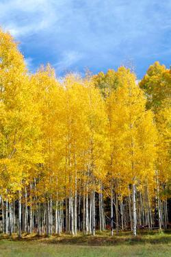 Colorado Color II by Douglas Taylor
