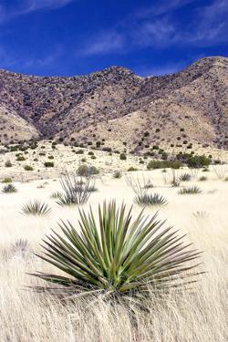 Desert Grasslands I by Douglas Taylor