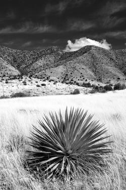Desert Grasslands II BW by Douglas Taylor