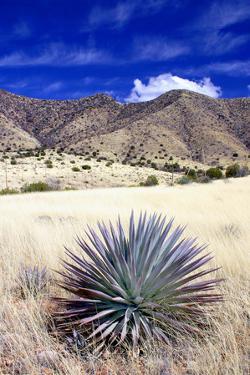 Desert Grasslands II by Douglas Taylor