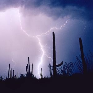 Electric Desert IV by Douglas Taylor