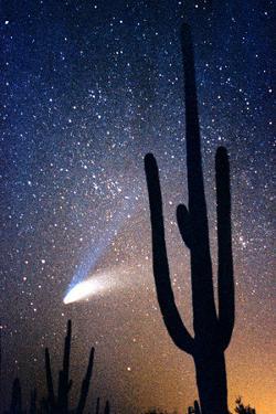 Hale Bop Comet by Douglas Taylor