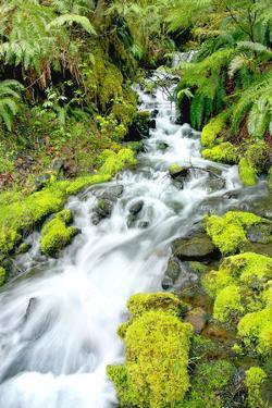 Mountain Stream by Douglas Taylor