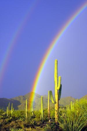 Saguaro Rainbow I by Douglas Taylor