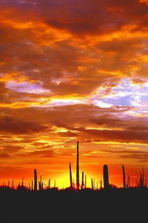 Sky a Fire I by Douglas Taylor