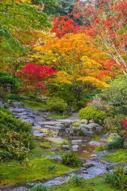 Fall Colors Rocky Stream by dplett