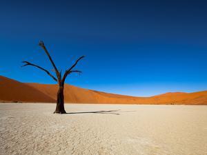 Dead Vlei - Sossusvlei, Namib Desert, Namibia by DR_Flash