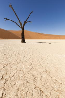Dry Trees in Namib Desert by DR_Flash
