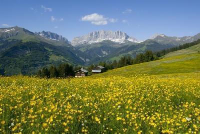 Alpine Meadow, Switzerland