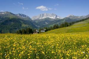 Alpine Meadow, Switzerland by Dr. Juerg Alean