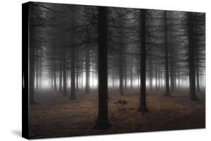 Silence by Dragisa Petrovic