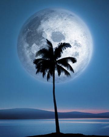 Dreamland (Palm Tree & Moon) Art Poster Print