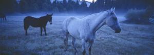 Dreamy Blue Mystery Horses