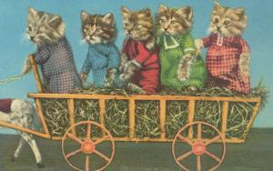 Dressed Kittens Go for a Hayride