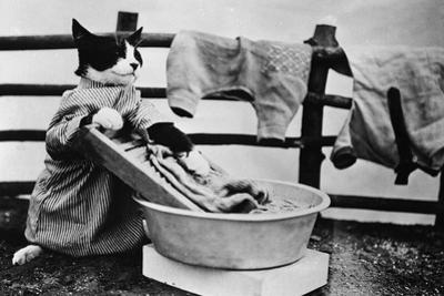 Dressed Up Cat Washing Clothes in Wash Tub