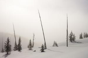Fog Envelops the Landscape on the Lewis River Canyon in Yellowstone National Park by Drew Rush
