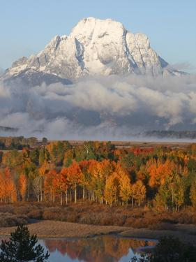 Mt. Moran on an Early Fall Morning in Grand Teton National Park by Drew Rush