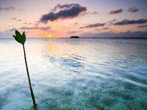 Sunset on the Flats of Acklins Island, Bahamas by Drew Rush