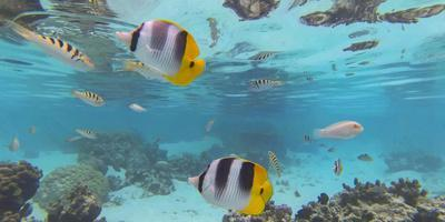 https://imgc.allpostersimages.com/img/posters/drift-snorkel-tahaa-french-polynesia-french-polynesia_u-L-Q1CZQ1Y0.jpg?p=0
