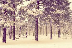 Winter Forest Vista by duallogic