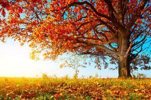 Big Autumn Oak With Red Leaves On A Blue Sky Background by Dudarev Mikhail