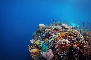 Coral Reef in a Tropical Sea. Philippines, Balicasag Island by Dudarev Mikhail