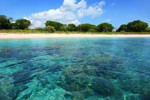 Coral Reefs in a Shallow Sea Situated Very close to a Sandy Beach at Sunny Day. Bali Barat National by Dudarev Mikhail