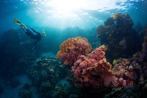 Free Diver Exploring Vivid Coral Reef in Tropical Sea by Dudarev Mikhail