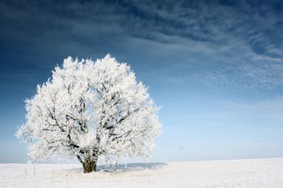 Frozen Tree on Winter Field and Blue Sky by Dudarev Mikhail