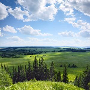 Green Rural Fields and Pine Trees. View from Top of a Hill. by Dudarev Mikhail