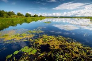 Pond with Water Lilies and Grass at Sunny Summer Day by Dudarev Mikhail
