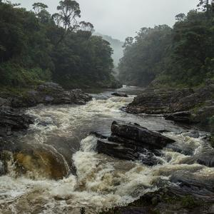 River in the Forest in National Park of Ranomafana, Madagascar by Dudarev Mikhail
