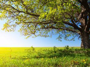 Spring Tree with Fresh Green Leaves on a Blooming Meadow by Dudarev Mikhail