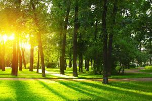 Sunset in Park with Trees and Green Grass by Dudarev Mikhail