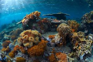 Underwater Shot of the Vivid Coral Reef at Sunny Day by Dudarev Mikhail