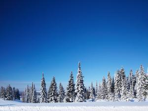 Winter Forest with Pine Trees and Snowy Field and Clear Blue Sky by Dudarev Mikhail