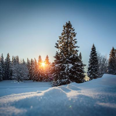 Winter Snowy Pine Trees at Sunset by Dudarev Mikhail