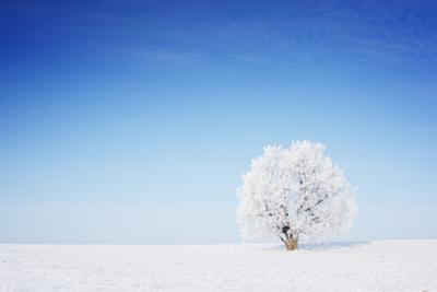 Winter Tree in a Field with Blue Sky by Dudarev Mikhail