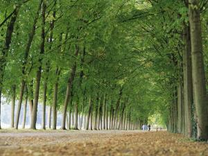 Avenue of Poplar Trees, Parc De Marly, Western Outskirts of Paris, France, Europe by Duncan Maxwell
