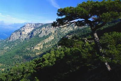 Cazorla National Park, Sierra Del Pozo, Andalucia, Spain
