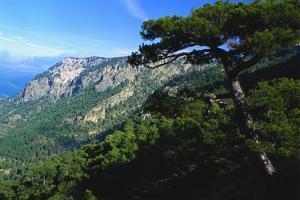 Cazorla National Park, Sierra Del Pozo, Andalucia, Spain by Duncan Maxwell