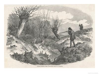 Rabbit Shooting Near Tunbridge Kent