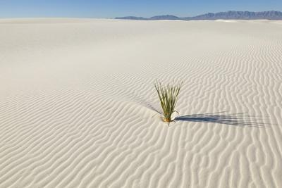 https://imgc.allpostersimages.com/img/posters/dune-and-yucca-plant-in-white-sands-national-monument_u-L-PZPJPZ0.jpg?p=0