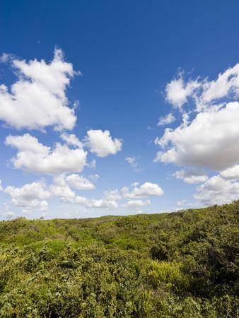 https://imgc.allpostersimages.com/img/posters/dunes-and-mediterranean-bush-behind-capalbio-beach-capalbio-grosseto-province-tuscany-italy_u-L-PHAVBJ0.jpg?p=0